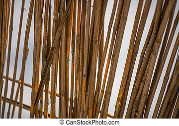 Abstrakt background from dry bamboo branches texture -...