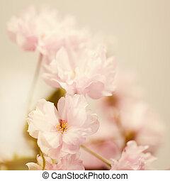abstrakt, bakgrunder, Blomstrar,  sakura, blommig, mjuk