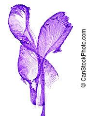 abstrakt, bild, von, iris, blumen, weiß, hintergrund