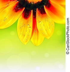 abstrakt, blomma, färgrik, blommig, bakgrund