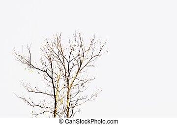 abstrakt, död, träd