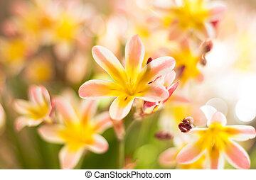 abstrakt, färgrik, blommig, bakgrund, med, fläck, och, bokeh.