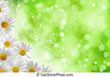 abstrakt, fjäder, bakgrunder, med, tusensköna, blomningen, och, blured, bokeh