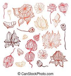 abstrakt, flower., vektor, hand, gezeichnet, abbildung, freigestellt