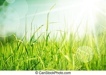 abstrakt, gräs, bakgrund, natur