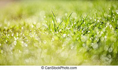 abstrakt, gras, hintergrund, mit, bokeh