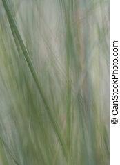 abstrakt, gras, hintergrund
