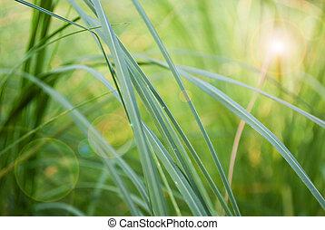 abstrakt, gras, hintergrund, whith, lehnt, leuchtsignal