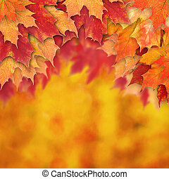 abstrakt, höst, bakgrund, falla, gräns, bladen