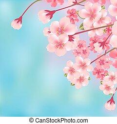 abstrakt, körsbär blomstra