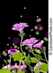 abstrakt, klocka, blomningen, design, över, svart