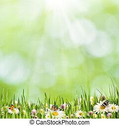 abstrakt, natürlich, landschaftsbild, mit, schoenheit, gänseblumen, blumen, und, bokeh