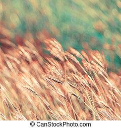 abstrakt, natur, bakgrund, med, gräs