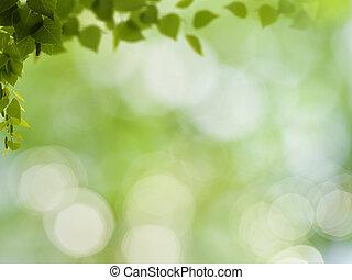 abstrakt, naturlig, bakgrunder, med, björk, lövverk, och,...