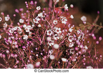 abstrakt, purpur, blommig, bakgrund, med, lent fokus, och, gammal, papper, struktur