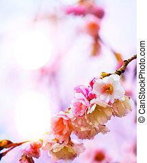 abstrakt, schöne , fruehjahr, hintergrund, mit, rosa, blüte