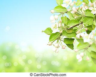 abstrakt, solig, fläck, fjäder, bakgrund, med, blomningen, av, äpple