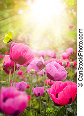 abstrakt, sommar, blommig, bakgrund
