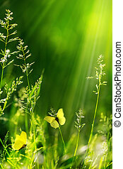 abstrakt, sommar, blommig, grön, natur, bakgrund