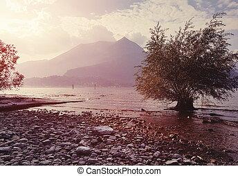 abstratos, árvore, mar, fundo