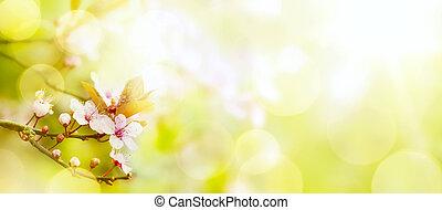 abstratos, flor mola, experiência;, páscoa, paisagem