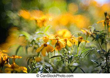 abstratos, flor mola, fundo