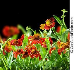 abstratos, flores, pretas, sobre, fundo