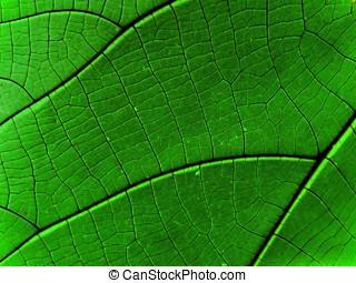 abstratos, floresta amazônica