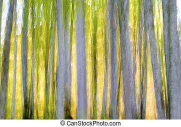 abstratos, floresta