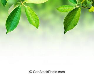 abstratos, folhas, fundo