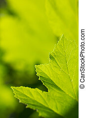 abstratos, leaf., experiência verde, natureza