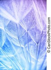abstratos, macro, foto, de, planta, sementes, em, um, manhã