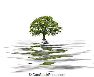 abstratos, verão, árvore carvalho