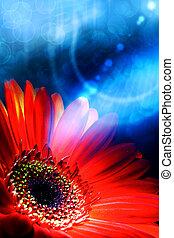 abstratos, verão, fundos, com, gerbera, flor