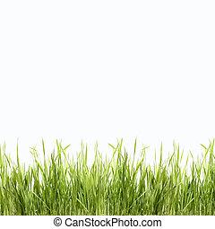 abstratos, verde, natureza, fundo, com, capim