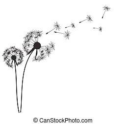 abstratos, vetorial, fundo, ilustração, dandelion