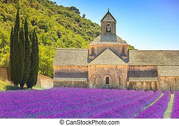 abtei senanque, und, blühen, reihen, lavendel, flowers., gordes, luberon, vaucluse, provence, frankreich, europe.