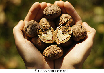Abundance - Two hands filled with walnuts