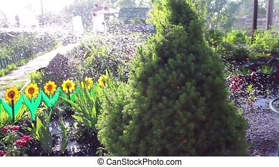 abundant watering plants on a hot day