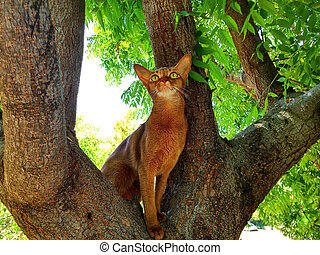Abyssinian cat on a tree