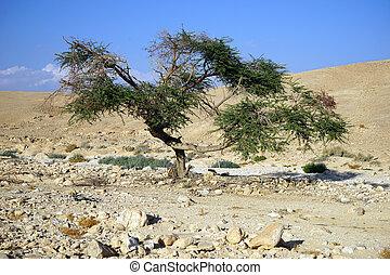 Presto sun albero acacia mattina foto cerca foto for Acacia albero