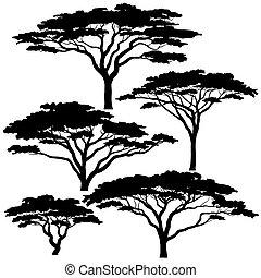 acacia, siluetas, árbol