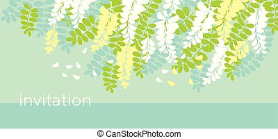 Acacia spring blossom flower design element. Tender mimosa...