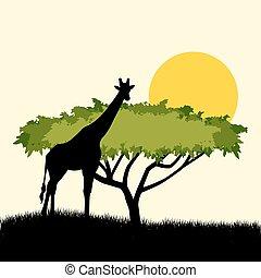 Acacia tree and giraffe silhouette concept design. illustration of African safari theme with giraffe and acacia tree
