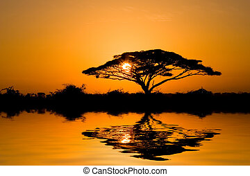 Acacia Tree at Sunrise - Beautiful african sunrise, with ...