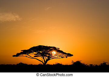 Beautiful african sunrise, with backlit acacia tree on Amboseli Natural Park, Kenya. Beautiful african sunrise, with backlit acacia tree.