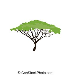 Acacia tree illustration on the white background. Vector...
