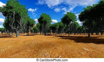 Acacia tree in the open savanna plains