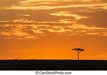 Acacia tree on the horizon at dawn in the Masai Mara