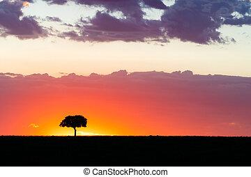 Acacia tree on the horizon at sunset in the Masai Mara